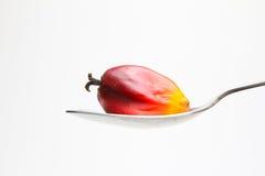 Ölpalmenfrucht auf Löffel Stockfoto