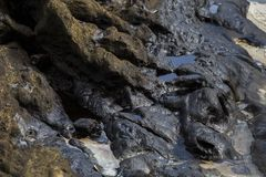 Ölpest auf dem Felsen Stockbild