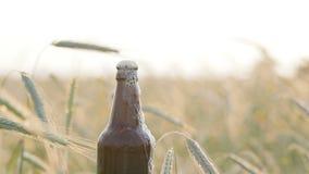 Ölskum tömmer från ett mörker, tappning, blöter flaskan in i fältet mot en bakgrund av korn eller vete arkivfilmer