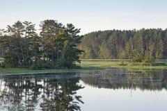 Ön med sörjer träd på en lugna nordlig Minnesota flod Arkivfoto