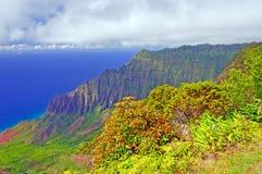 ön planterar den tropiska kraftfullen Arkivbilder