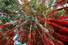Önska ordBanyanträdet, Sekinchan, Malaysia Arkivfoto