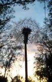 Önska solnedgång royaltyfri foto