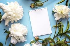 Öppen anteckningsbok för mellanrum med nya vita pioner på en blå backgroun Fotografering för Bildbyråer
