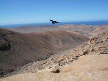 Öppen bergfönstersikt med fågeln i den Fuerteventura kanariefågeln/öar Arkivfoton