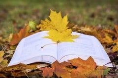 Öppen bok i en höstträdgård royaltyfri foto