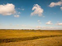 Öppen marsklanlandskapplats med blåa himlar, moln och gras Royaltyfri Fotografi
