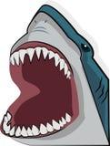 Öppen mun för haj Arkivbild