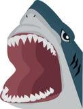 Öppen mun för haj Royaltyfria Bilder