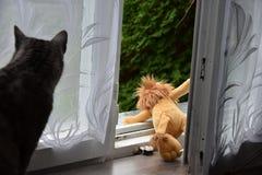 Öppet fönster, övergiven leksak Katten ser leksaken Royaltyfri Foto
