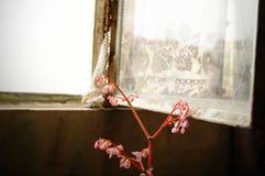Öppet fönster för metall med blomman Arkivbilder