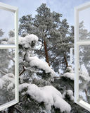 Öppet fönster till den snöig vinterskogen Arkivbild