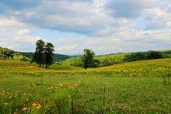 Öppna ängen med gula vildblommor. Arkivbilder