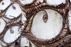 Öppna ögon- och ögonfransträdstammen Royaltyfri Bild