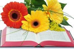 Öppna bibeln och härliga blommor på vit bakgrund Arkivbild