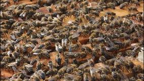Öppna bikupan