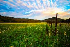 Öppna blommafältet i Napa Arkivbilder