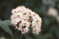 Öppna blommor arkivfoton
