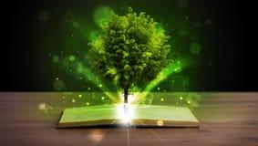 Öppna boken med det magiska gröna trädet och strålar av ljus Royaltyfria Foton