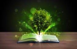 Öppna boken med det magiska gröna trädet och strålar av ljus royaltyfria bilder