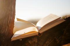Öppna boken på träd Fotografering för Bildbyråer