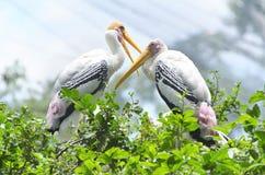 Öppna den fakturerade storken i zoo Royaltyfri Bild