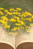Öppna det andliga fredkungariket för bibeln av guden fotografering för bildbyråer