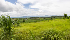 Öppna fältet i Thailand Arkivbilder