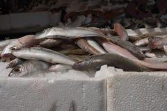 Öppna fiskmarknaden Royaltyfri Fotografi