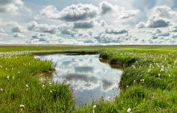 Öppna grässlätten och moln med reflexioner i vatten iceland arkivbild