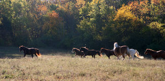 öppna hästar betar running Royaltyfria Foton