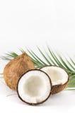 Öppna och hela kokosnötter och palmblad Arkivbild