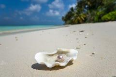 Öppna skalet med en pärla på den tropiska sandiga stranden Royaltyfri Bild