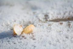 Öppna snigeln på kusten Arkivfoto
