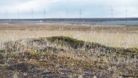Öppna totalt täckt i litet gräs, mjuk mossa, laver video Steniga stenar på gräset i kulle Härligt landskap arkivfilmer