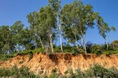 Öppna träd rotar tack vare jordskred, jorderosion, efter vägsnitt royaltyfria bilder