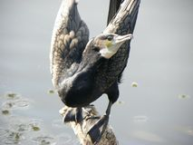 öppna vingar för fågel Royaltyfri Fotografi