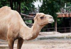 Öppna zoo Arkivfoto