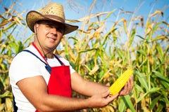 Öra för majs för bondevisninghavre på fältet Royaltyfria Bilder