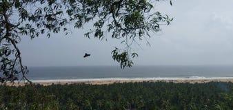Örn trivandrum för sand för klippahavsvågor royaltyfri bild