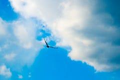 Örnflyg i skyen arkivfoton