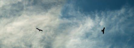 Örnsilhouettes soar över den molniga skyen royaltyfria foton