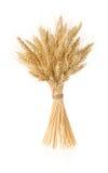 Öron av korn på white Royaltyfria Foton