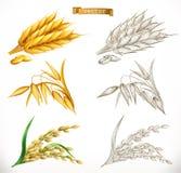 Öron av vete, havre, ris stilar för realism 3d och gravyr vektor vektor illustrationer