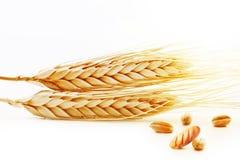 Öron av vete med korn och nytt bröd arkivbilder