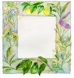 ört för blommaramfrukt Royaltyfri Bild