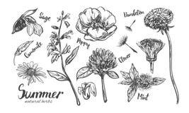 Ört- och blommasamling Vektorn räcker utdraget stock illustrationer