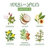 Ört- och kryddasamling 12 stock illustrationer