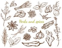 Ört- och kryddasamling royaltyfri illustrationer