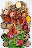 Ört- och kryddasmaktillsats royaltyfria bilder